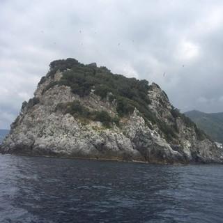 Con Swimtheisland il Golfo dell'Isola di Bergeggi sarà capitale del nuoto in acque libere